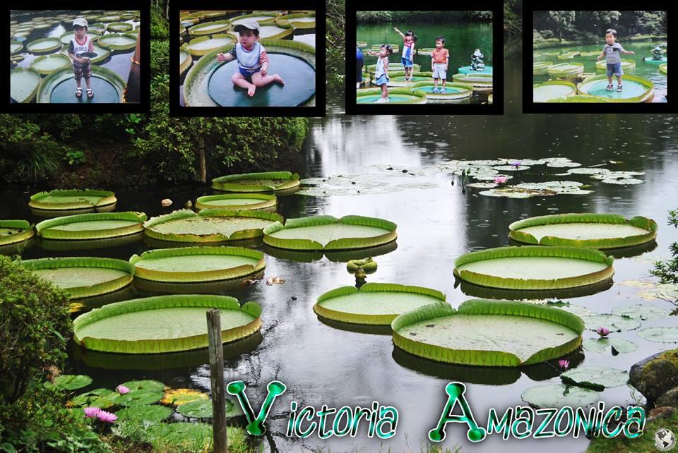 Victoria Amazónica, Japón