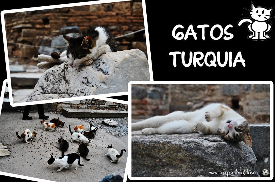 Gatos en las calles de Turquía