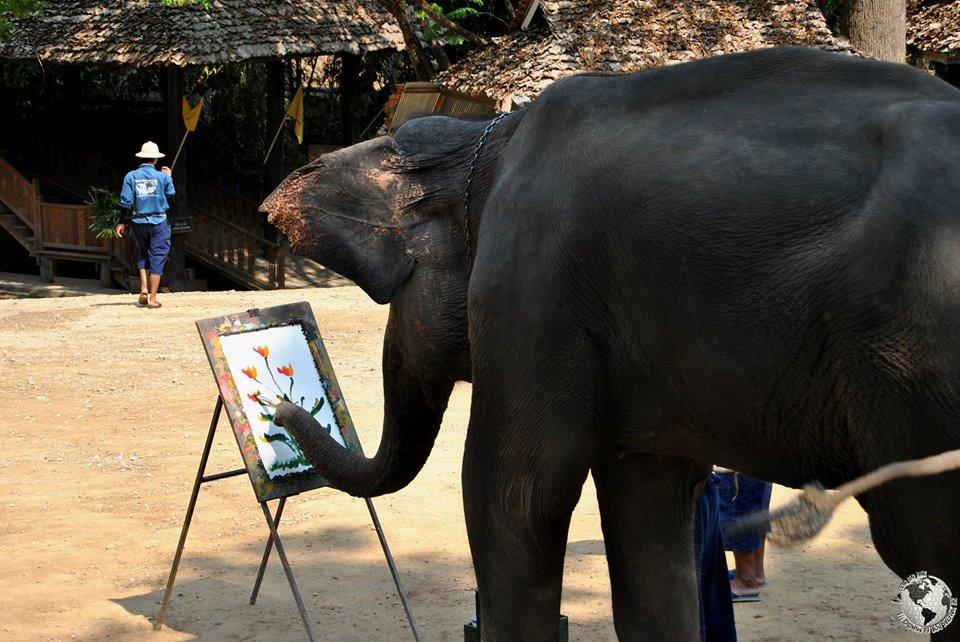 Campo de elefantes Maesa, Chiang Mai
