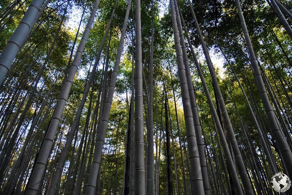 Bosque de Bambú Sagano Arashiyama, Japón