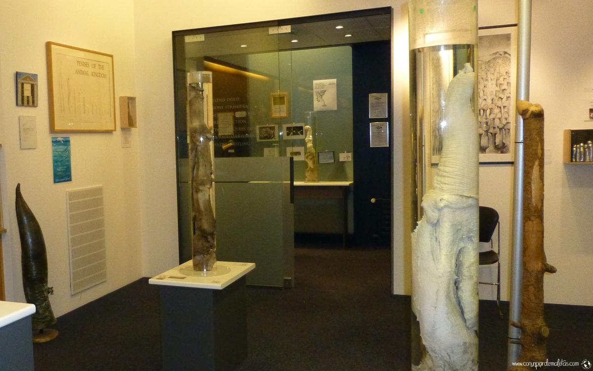 El museo del pene más grande del mundo, Reikiavik