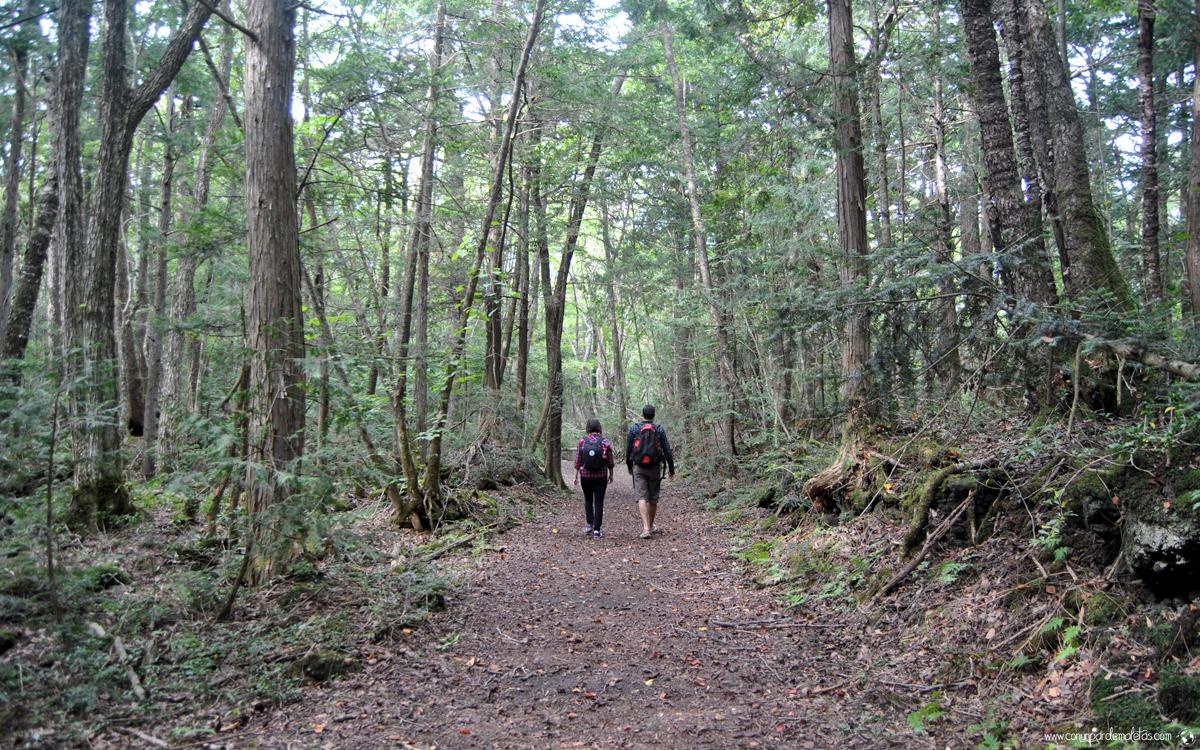 Aokigahara, el inquietante bosque de los suicidios en Japón